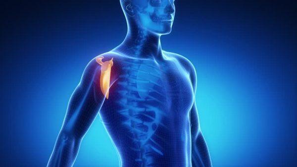 ランニング 肩甲骨
