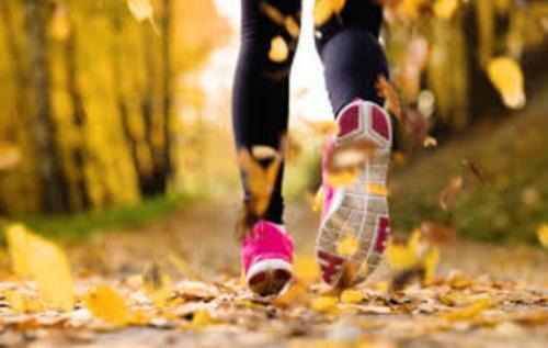 秋のフルマラソン 練習